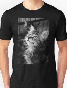 Kitten looking up T-Shirt