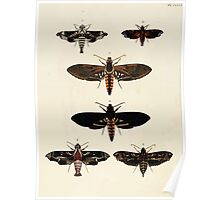 Exotic butterflies of the three parts of the world Pieter Cramer and Caspar Stoll 1782 V3 0094 Poster