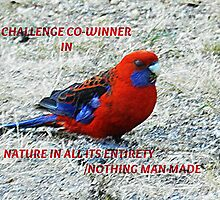 Co-winner- Banner - Nature in all its Entirety/Nothing Man Made Challenge winner by EdsMum