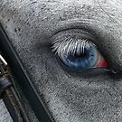 Beautiful Blue Eye by Liz Davidson