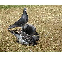 Pigeons at Hyde Park Photographic Print