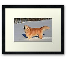 Sassy Personified! Framed Print