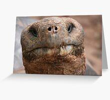 Giant Galapagos Tortoise - Galapagos Greeting Card