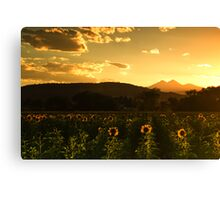 Summer Skies Of Orange Canvas Print