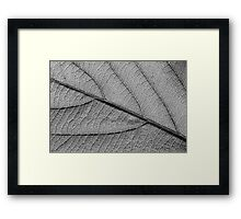 Leaf 9119 Framed Print