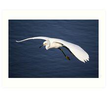 Snowy Egret in Flight Art Print