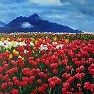 Tulip Festival  by Aziz Mohammed