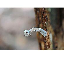 mouldy mushroom Photographic Print
