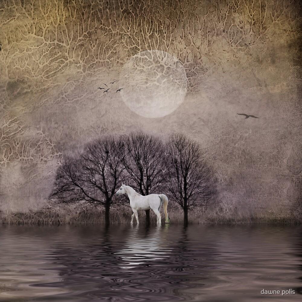 A White Horse in the Pond by dawne polis