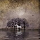 A White Horse in the Pond by dawne polis