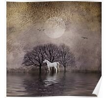 A White Horse in the Pond Poster