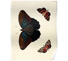 Exotic butterflies of the three parts of the world Pieter Cramer and Caspar Stoll 1782 V1 0180 Poster