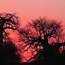 Boabab sunset by jozi1