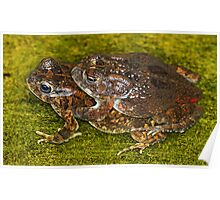 Mating frogs! Poster