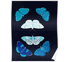Exotic butterflies of the three parts of the world Pieter Cramer and Caspar Stoll 1782 V2 0277 Inverted Poster
