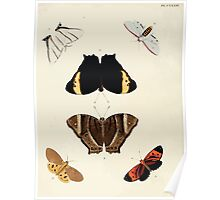 Exotic butterflies of the three parts of the world Pieter Cramer and Caspar Stoll 1782 V2 0138 Poster