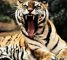 Scary Tiger by alexa20