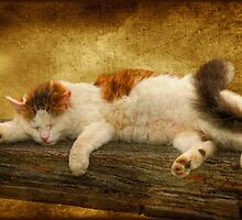 Sleepy Kitty by Lois  Bryan