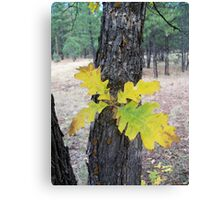 Leaves on the Trunk Canvas Print