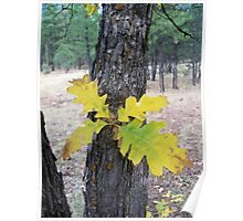 Leaves on the Trunk Poster