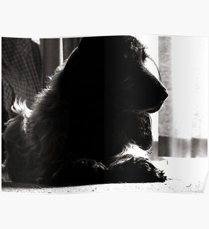 Sooty Lighting - Cocker Spaniel Poster
