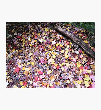 October Vermont Forest Carpet Photographic Print