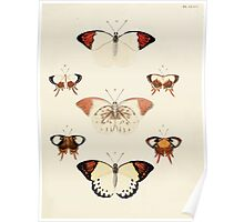 Exotic butterflies of the three parts of the world Pieter Cramer and Caspar Stoll 1782 V2 0247 Poster