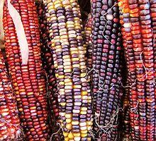 Corn Rows by shutterbug2010