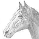 Equus by Jennie L. Richards
