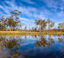 River Murray Reflections - Renmark, South Australia by Mark Richards