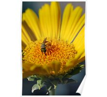 Busy Yellow Bee Poster