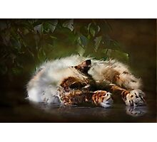 """""""Paws Warmed by the Sun ...""""(textured) Photographic Print"""
