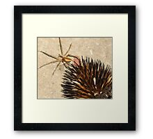 Prickly, Crawly Things Framed Print
