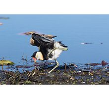 Jacana Yoga Photographic Print