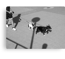 Walk the Dogs Canvas Print