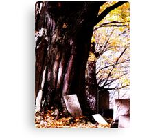 Restful Tree Canvas Print