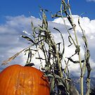 Happy Harvest by © Loree McComb