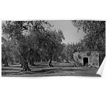 The Olive Grove - Puglia, Italy Poster