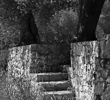No Trespassing - Puglia, Italy by Debbie Pinard