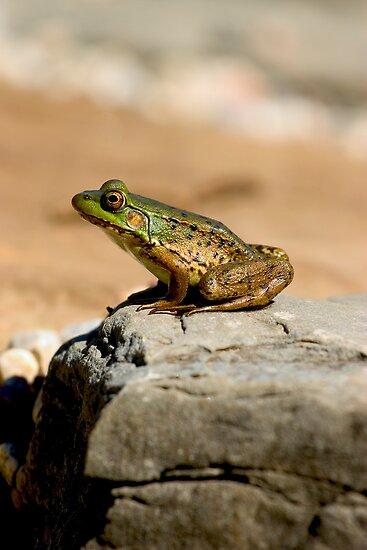 Frog on a Rock - My Backyard Pond by Debbie Pinard