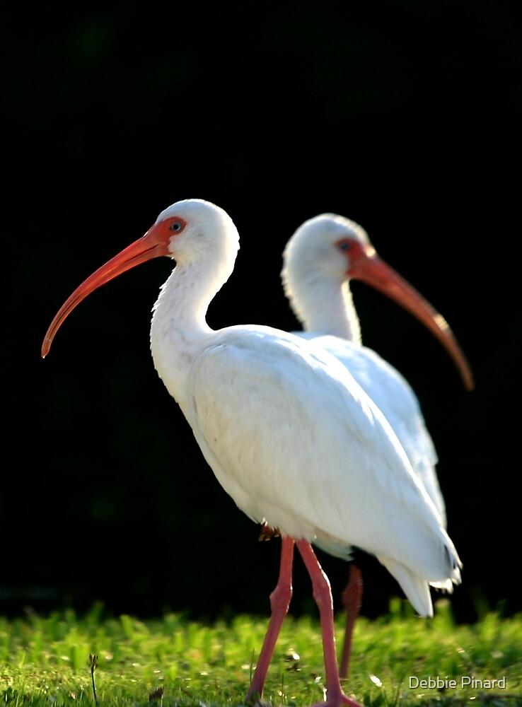 Two Birds - Sugarloaf Key Florida by Debbie Pinard