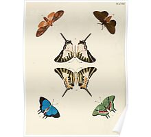Exotic butterflies of the three parts of the world Pieter Cramer and Caspar Stoll 1782 V1 0318 Poster