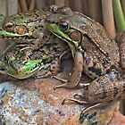 3 Frogs in a Pile - My Backyard Pond by Debbie Pinard