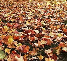 Autumn by Sharon-Leigh Ricker