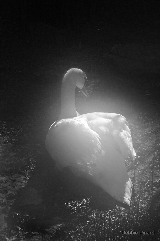 Misty Swan - Puglia, Italy by Debbie Pinard