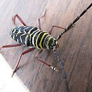 this bug!! by gabbielizzie