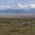 Zeebra Grazing the Ngorongoro Crater - Tanzania by Nina Brandin