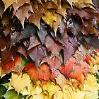 United Colors of Autumn by AndreeaGogu