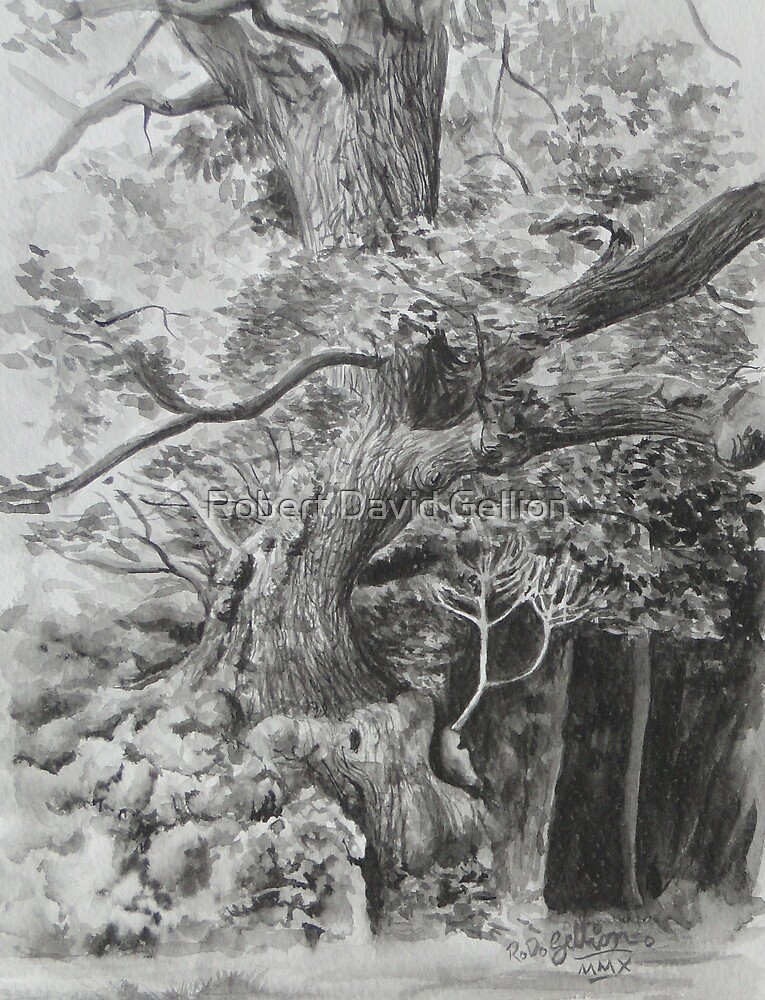 Rothley Park oak Ambleside. by Robert David Gellion