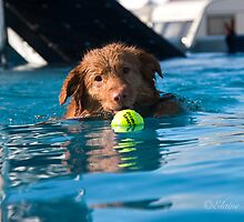 At last, got the ball, by Elaine123